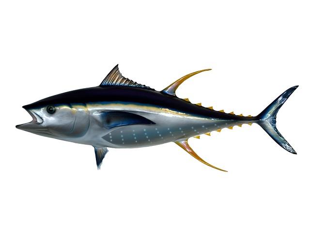 Venta al mayor de atún.